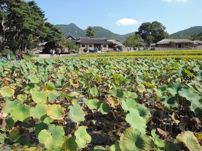 충남 아산의 외암민속마을 하부에 있는 정화시설용 연못. - 녹색기술센터 제공
